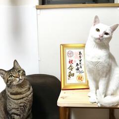 わたしのGW/にゃんこ同好会/LIMIAペット同好会/ペット仲間募集/猫/きじとら猫/... ㊗ 令和 ㊗ 新元号ってなに? ニム 令…(1枚目)