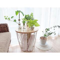 観葉植物のある暮らし/ドライフラワーのある暮らし/楽天Roomに載せてます/グリーンのある暮らし/シンプルライフ/シンプルインテリア/...