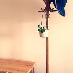 植物のある暮らし/プロフィールからどうぞ/詳しくはブログで/unico/チェーンフック/キャンドゥ/... セリアのチェーンフックで観葉植物を吊るし…