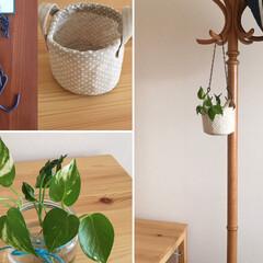 植物のある暮らし/プロフィールからどうぞ/詳しくはブログで/unico/チェーンフック/キャンドゥ/... セリアのチェーンフックで観葉植物を吊るし…(2枚目)