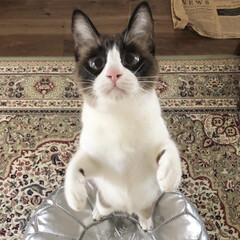 猫と暮らすインテリア/猫と暮らす/保護猫/LIMIAペット同好会/フォロー大歓迎/ペット/... たっちだって上手に出来ますのよ💕