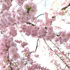 春のフォト投稿キャンペーン/わんこ同好会/わたしのGW わぁー綺麗だなぁ❗️ 美味しいのかなぁ?…