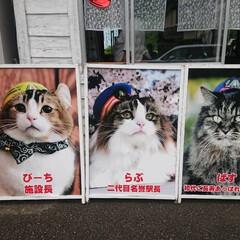 「猫さん好きの、友達が、癒されて来たそうで…」(4枚目)