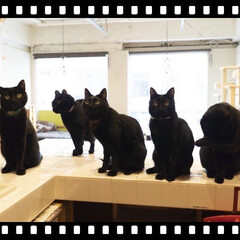「黒猫さん専門の猫カフェです🤗 いつか行き…」(2枚目)