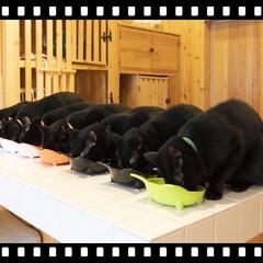 「黒猫さん専門の猫カフェです🤗 いつか行き…」(1枚目)
