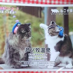 「猫さん好きの、友達が、癒されて来たそうで…」(2枚目)