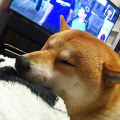 おやすみショット こたつがホッコリして眠くなりました…💤(1枚目)