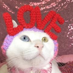 マリー/バレンタイン2019/LIMIAペット同好会/フォロー大歓迎/ペット仲間募集/猫/... love love 愛を叫ぼう