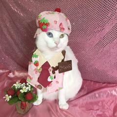 コスプレ猫/マリー/バレンタイン2019/LIMIAペット同好会/フォロー大歓迎/ペット/... 甘〜いloveを受け取ってくれるかニャン…