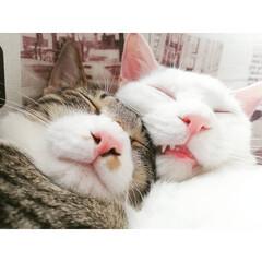 なかよし/兄弟/保護猫出身/元保護猫/保護猫/ねんね/... 安心出来るパートナーが居るって良いよね~…(2枚目)