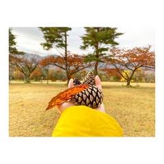 ゆるキャン/宮城県/吹上高原/ワークマン/おでかけ/紅葉/...   秋キャンプに行ってきました⛺️🍠🍂🍁