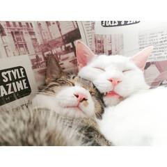 なかよし/兄弟/保護猫出身/元保護猫/保護猫/ねんね/... 安心出来るパートナーが居るって良いよね~…
