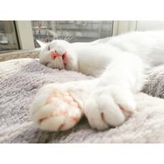 ひなたぼっこ/お昼寝/かわいい/元保護猫/保護猫/LIMIAペット同好会/... 人間ならよだれ凄いやつ🤣✨