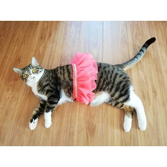 猫/元保護猫/令和元年フォト投稿キャンペーン/令和の一枚/フォロー大歓迎/LIMIAペット同好会/... マッシュくん、次女が履いてた昔の水着の可…
