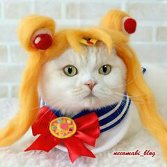 ハンドメイド/コスプレ衣装/猫服/猫/フォロー大歓迎/LIMIAペット同好会/... 『月に代わってお仕置きよ❣』 セーラーム…