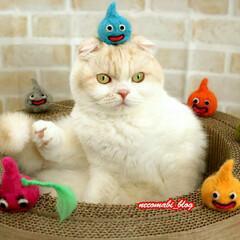 猫好きさん/スコティッシュフォールド/LIMIAペット同好会/フォロー大歓迎/ペット/ペット仲間募集/... スライム出現Σ(゚∀゚ノ)ノキャー のせ…
