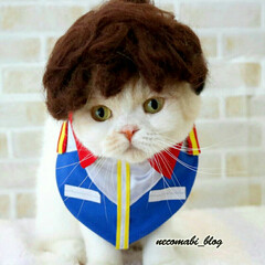 猫服/コスプレ衣装/猫/スコティッシュフォールド/令和の一枚/フォロー大歓迎/... 機動戦士ガンダムの大人気キャラクター、ア…