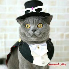 ハンドメイド/コスプレ猫/コスプレ/猫服/猫/LIMIAペット同好会/... タキシード仮面に変身😎✨