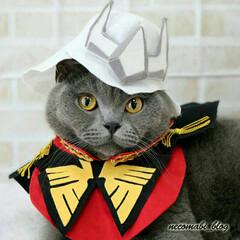 ハンドメイド/猫のいる暮らし/コスプレ衣装/猫服/ブリティッシュショートヘア/猫/... 機動戦士ガンダムの大人気キャラクター、シ…