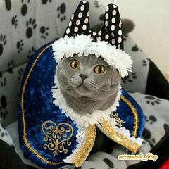 猫服/ハンドメイド/LIMIAペット同好会/フォロー大歓迎/ペット/ペット仲間募集/... ハッピーバースデー❣コロ助くん🎉 今日で…