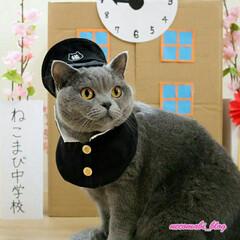 コスプレ猫/学ラン/猫好きさんと繋がりたい/ブリティッシュショートヘア/猫/春のフォト投稿キャンペーン/... ボクね、幼稚園にも行った事ないけど… ス…