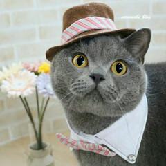 ハンドメイド/猫服/コスプレ/猫のいる暮らし/ブリティッシュショートヘア/猫/... ちょっぴり大人っぽく(*´ェ`*) 似合…