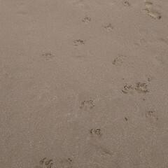 本須賀海岸/海を感じる/海のある暮らし/海が見える/海辺/海遊び/... 家から車で30分で海に行ける幸せ😆🍀 ま…(2枚目)