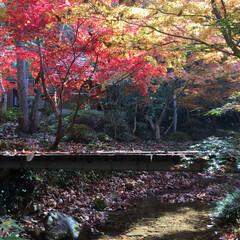 紅葉/紅葉狩り/子どもと暮らす/子どものいる生活/子供のいる暮らし/キャンプ好き/... いろんな色の紅葉がとても綺麗で、本当にお…