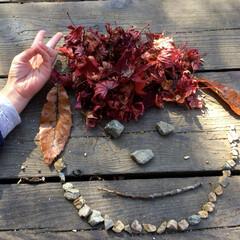 子供のいる暮らし/子どもと暮らす/紅葉狩り/紅葉/秋キャンプ/キャンプ好き/... 紅葉狩りに行った時に、娘が落ち葉を集めて…