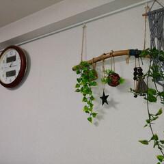 ピクチャーレール/壁掛け/流木/壁面/3COINS/グリーン/... 流木グリーン