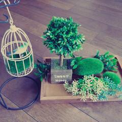 鳥かご/グリーン/100均/ダイソー/インテリア/セリア/... 玄関に置く、季節の飾りコーナー
