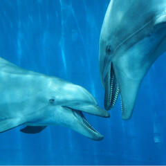水族館/イルカ/おでかけワンショット/フォロー大歓迎/はじめてフォト投稿/旅行/... イルカがお話しているようでした♡ #おで…
