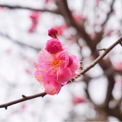 フォト/写真/小さい春/おでかけワンショット/LIMIAおでかけ部/フォロー大歓迎/... 四季があるのは、素晴らしいこと。 だよね〜