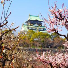フォト/写真/小さい春/LIMIAペット同好会/フォロー大歓迎/はじめてフォト投稿/... 大阪城へ 梅がちらほらと咲き始めてきて …