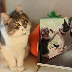 にゃんぱく/ペット同好会/にゃんこ同好会/長毛猫/多頭飼い/保護猫 にゃんぱくで展示されてたパネルが届いたに…