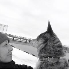 うちの子ベストショット 雪の日のお散歩。大好きだよ。