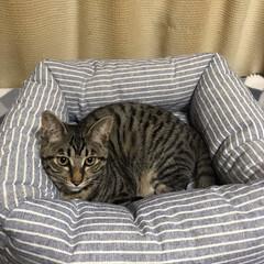 最近買った100均グッズ 猫専門誌やネットを参考に、ダイソーの座布…