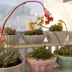 多肉/多肉植物 I love succulents an…