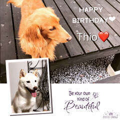犬派 Thio 8歳のお誕生日おめでとう🎉  …