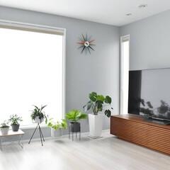 窓際/テレビボード/リビングインテリア/植物のある暮らし/アクセントクロス/インテリア 窓際に植物を集めて日光浴してます。 最近…