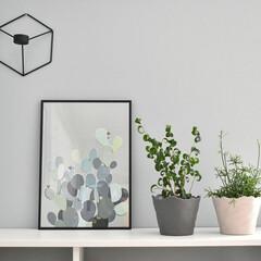キャンドルホルダー/menu/植物のある暮らし/植物/serax/北欧/... シェルフ上のインテリア! 植物を置いた横…