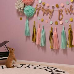 うさぎのいる暮らし/うさぎ/こども部屋/フォロー大歓迎/ペット/ペット仲間募集/... 誕生日のウォールデコレーションとうさぎの…
