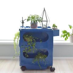 植物/収納ワゴン/収納/ボビーワゴン収納/ボビーワゴン/イタリアンミッドセンチュリー/... イタリアンミッドセンチュリーのボビーワゴ…