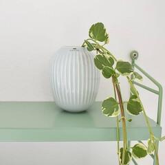 植物のある暮らし/植物/インテリア/フラワーベース/ケーラーハンマースホイ/ケーラー/... 新しくわが家にお迎えしたのは、ケーラーの…