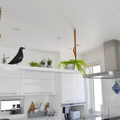 植物のある暮らし/植物/吊り下げ収納/ハンギングシェルフ/吊り棚/DIY/... キッチンのカウンター上に、ハンギングシェ…