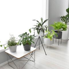 モンステラ/ポットカバー/鉢カバー/グリーンインテリア/植物のある暮らし/おしゃれ/... 窓際に植物を集めて日光浴! こうみると同…