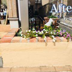 コンクリート花壇/花壇リメイク/花壇DIY 既設のコンクリートの花壇 無機質で、あま…