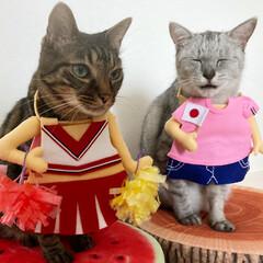 LIMIAペット同好会/猫/オリンピック オリンピックが始まりましたね。 テレビの…(3枚目)
