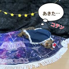 誕生日フォト/コスプレ/誕生日/LIMIAペット同好会/猫 今日はルナの6歳のお誕生日です💕 元気に…(5枚目)