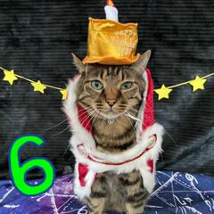 誕生日フォト/コスプレ/誕生日/LIMIAペット同好会/猫 今日はルナの6歳のお誕生日です💕 元気に…